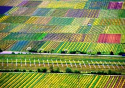 Colorful vineyards