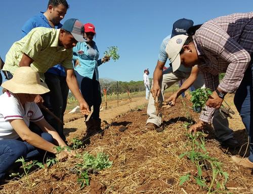 Nuevo curso: Huerta Orgánica para el Hogar