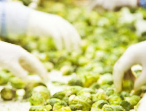 Modernización de los sistemas de gestión de la inocuidad alimentaria